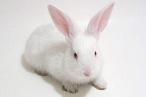 A223-实验动物定制