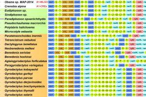 A311-phylogeny