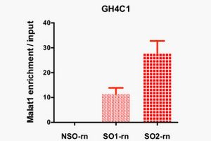 A332-蛋白相互作用研究